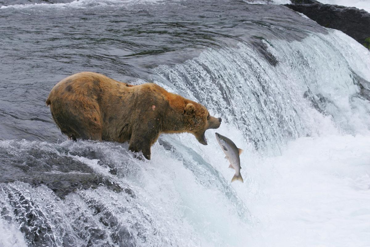 How to Find a Bear in Alaska: Katmai National Park
