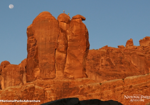Three Penguins in Arches National Park